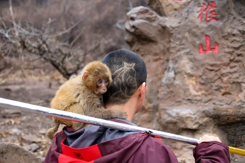 """不一样的""""龙抬头"""":护猴人把自己头发理成""""齐天大圣"""""""