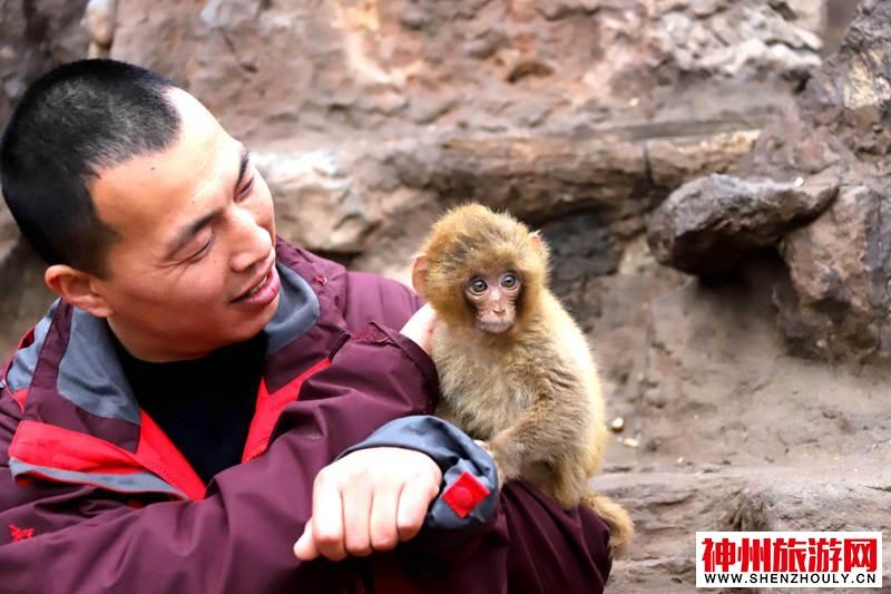 """别样""""龙抬头"""":护猴人把自己头发理成""""齐天大圣"""""""
